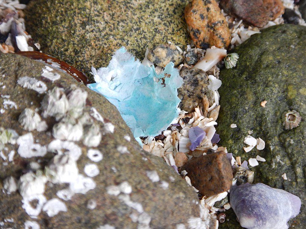 barnacle-s-DSCN1702-web