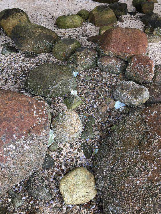 barnacle-wide-IMG_5723-web