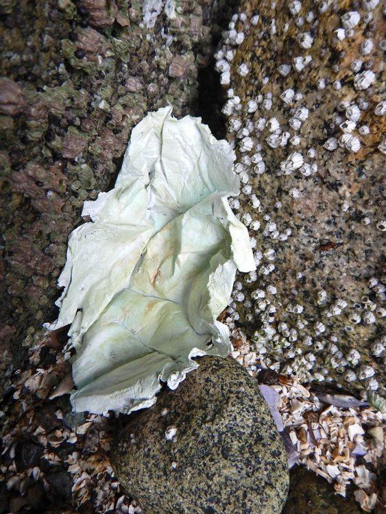 barnacle-xl-DSCN1666-edit-web