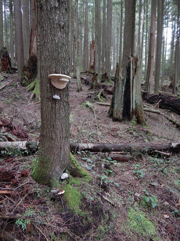 mushrooms-web-DSCN1781