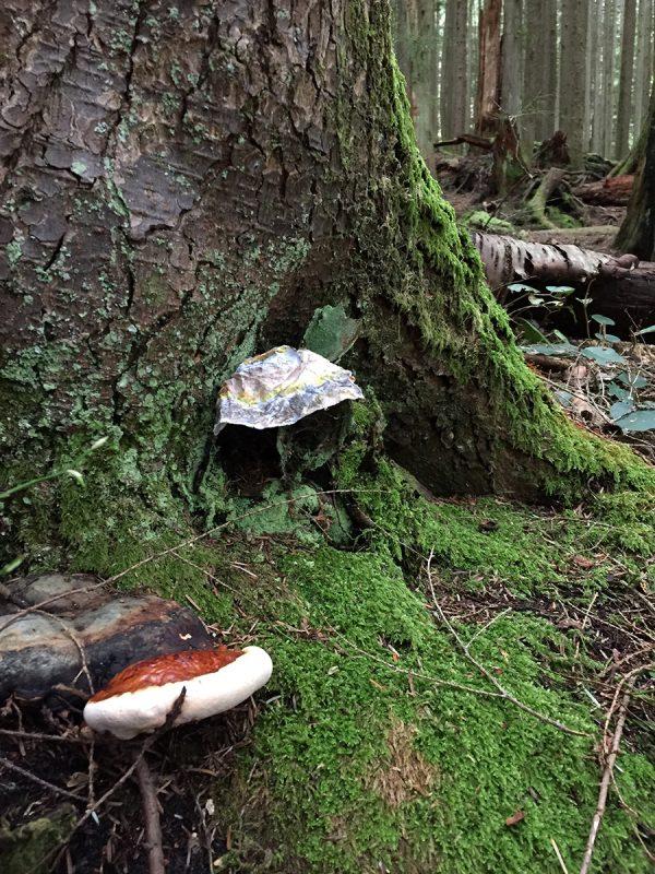 mushrooms-web-IMG_5828